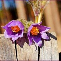 Глаза в глаза с весной :: Лидия (naum.lidiya)