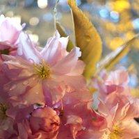 Мы все друг другу братья под вишнями в цвету :: Татьяна Кадочникова
