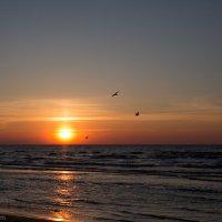 Закат на Рижском заливе :: Gotardo Ro