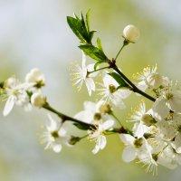 Весна :: Сергей Калмыков