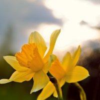 Весна! :: Денис Масленников