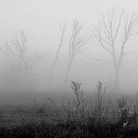 Мертвые деревья :: Ростислав