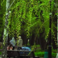 Парк в мае :: Albina