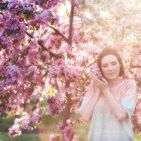 Весна, яблоня Недзвецкого :: Alex Lipchansky