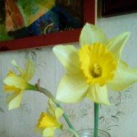 Весенние цветы! :: Светлана Калмыкова