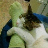 Лечебный кот!!! :: Светлана Масленникова