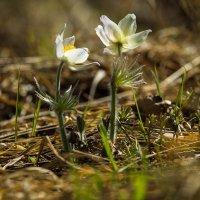весна на Урале :: Юлия Раянова