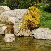 В японском саду весной :: Светлана