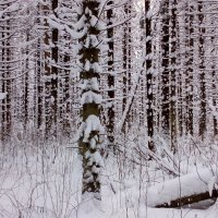 Зимний лес :: Анатолий Киренков