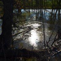 Яркий солнечный свет на реке :: Сергей Тагиров