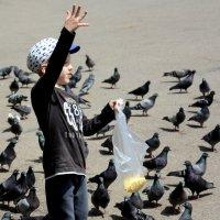 Кормление голубей :: Асылбек Айманов