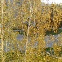 Молодая листва в лучах солнца. :: Мила Бовкун