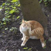 Апрельский котик :: Aнна Зарубина