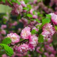 Цветы :: Константин Бобинский