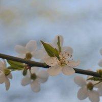 еще одна весна :: Nikita S