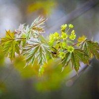 Зеленый шум :: Игорь Овсянников