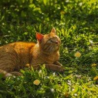 Весенний котик :: Альмира Юсупова