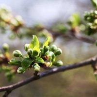 подготовка к цветению :: Эльмира Суворова