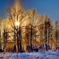 Мороз и солнце день чудесный. :: Марина Никулина