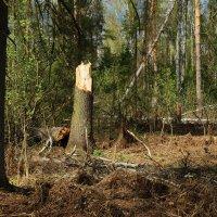 майскими лесами :: sergej-smv
