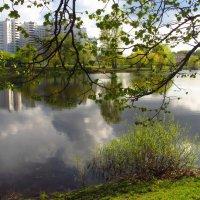 Первая зелень в парке :: Андрей Лукьянов