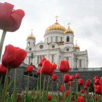 ХХС :: Михаил Бибичков