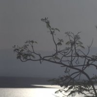 Light :: valeko
