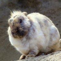 из жизни кроликов :: Александр Прокудин