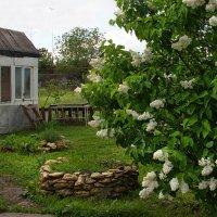 В моём дворе сирень цветёт. :: Наталья S