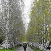 зелено... :: Alexandr Staroverov
