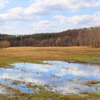 В поле :: Галина Новинская