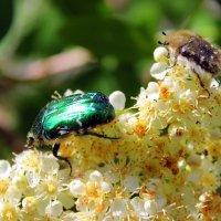 По веткам растений карабкаясь ловко, с цветов молодых собирали нектар… :: Валентина ツ ღ✿ღ