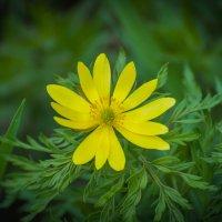 Желтый на зеленом :: Софья Оганова