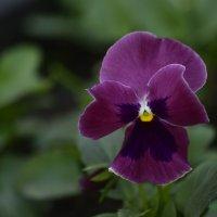 Цветок в парке :: Михаил Тищенко