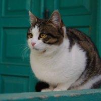 кошачьи думы :: Ксения смирнова