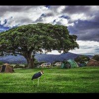 Привал на ночевку в саванне...Танзания! :: Александр Вивчарик