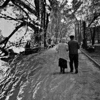 Старость не защищает от любви, но любовь защищает от старости :: Svetlana Kravchenko