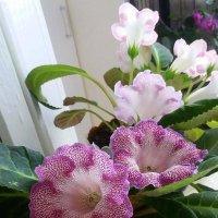 Комнатные цветы. :: Мила Бовкун