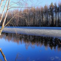 Голубая весна... :: Iverinka .