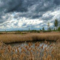 Озеро в камышах :: Милешкин Владимир Алексеевич