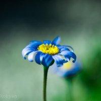 Flower petal :: Armen. Hakobyan