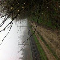 Утренний туман :: Anji 14 Ilgova