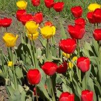 весенние цветы :: Максим Мальцев
