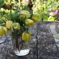 Цветы :: Анжелика Cадчикова
