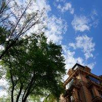 Уходящие в небо ... :: Лариса Корженевская