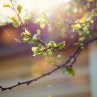 Весна идёт... :: Анна Булгакова