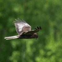 Птица :: Alex Bush