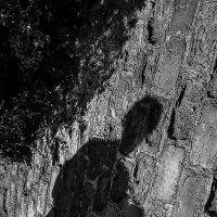 отброшенная тень .... :: Svetlana AS