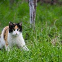 Очень серьезная кошка. :: Мила ...