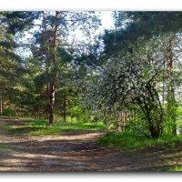 Лесные дорожки. :: Чария Зоя
